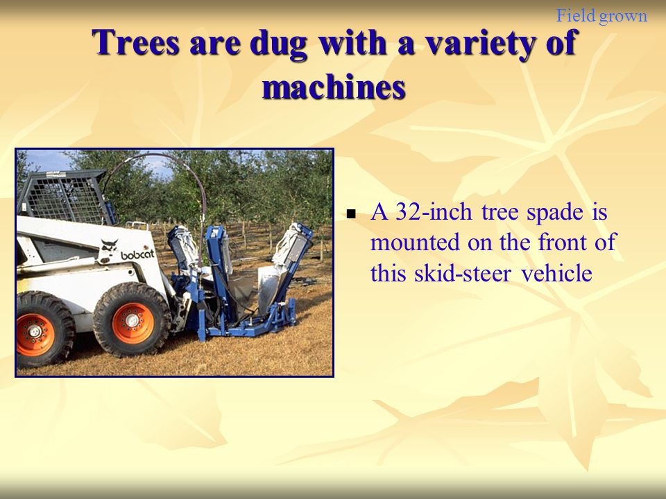 Trees are dug with a variety of machines