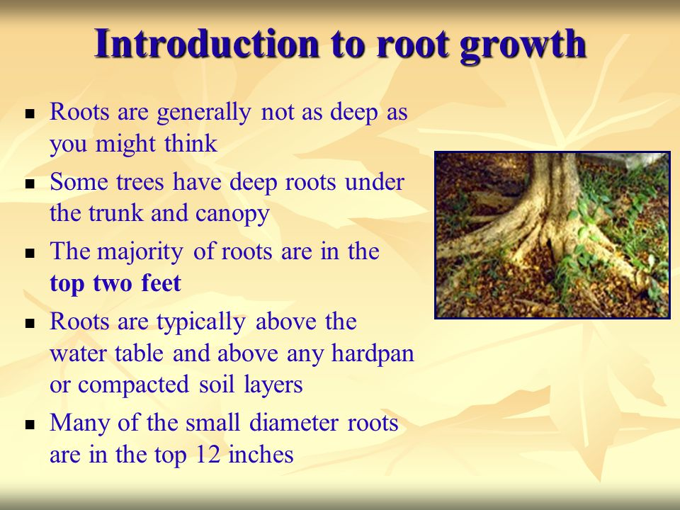 Introduction to root growth