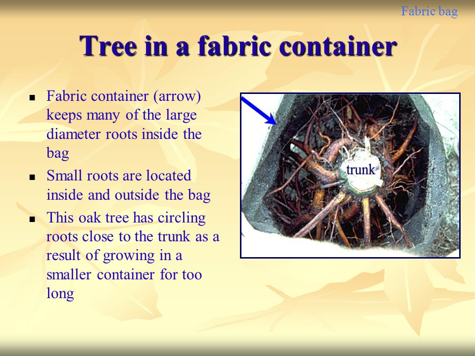 Tree in a fabric container