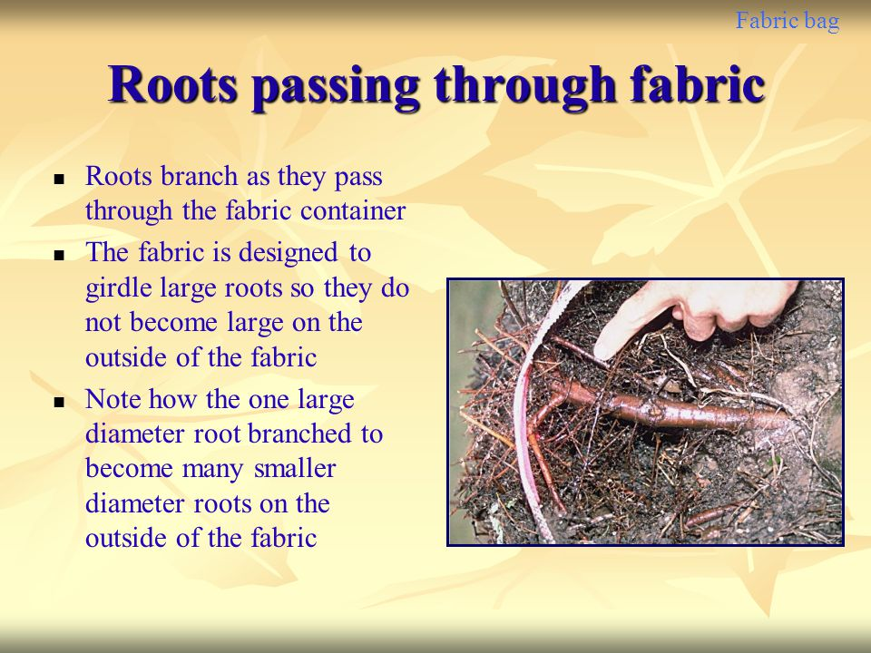 Roots passing through fabric