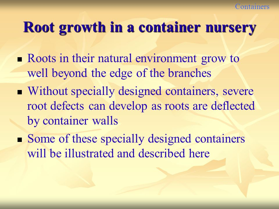 Root growth in a container nursery