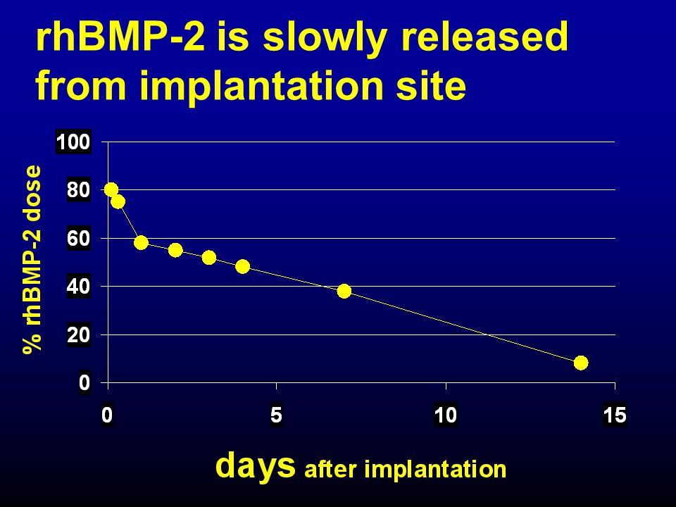 rhBMP-2 is slowly released from implantation site