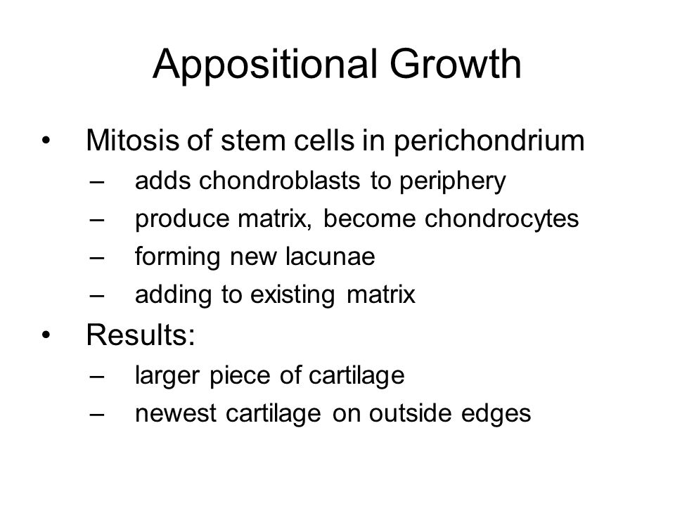 Appositional Growth Mitosis of stem cells in perichondrium Results: