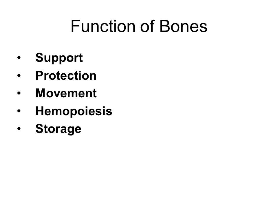 Function of Bones Support Protection Movement Hemopoiesis Storage
