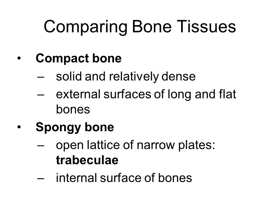 Comparing Bone Tissues