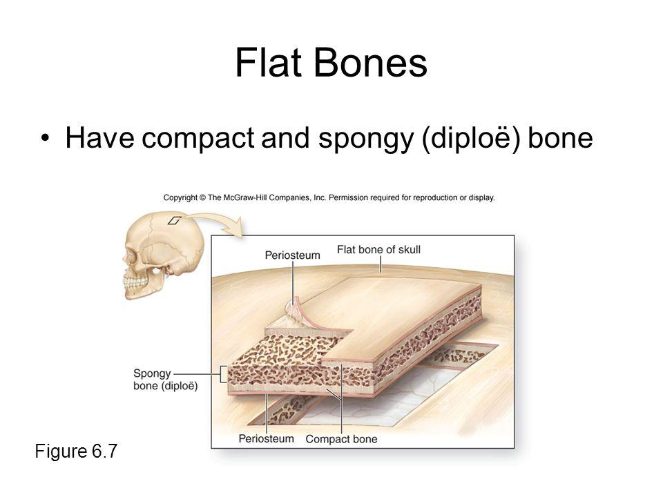Flat Bones Have compact and spongy (diploë) bone Figure 6.7