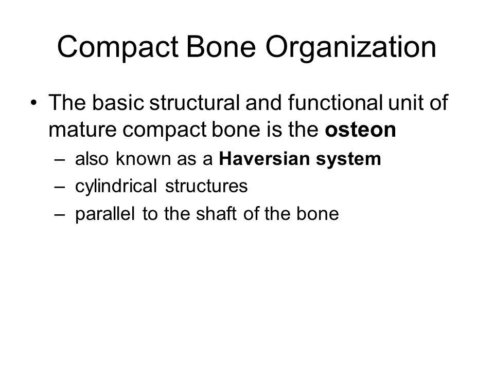 Compact Bone Organization