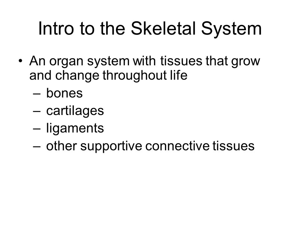 Intro to the Skeletal System