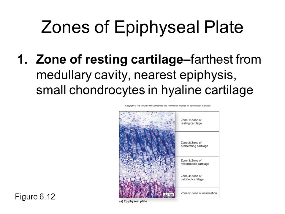 Zones of Epiphyseal Plate
