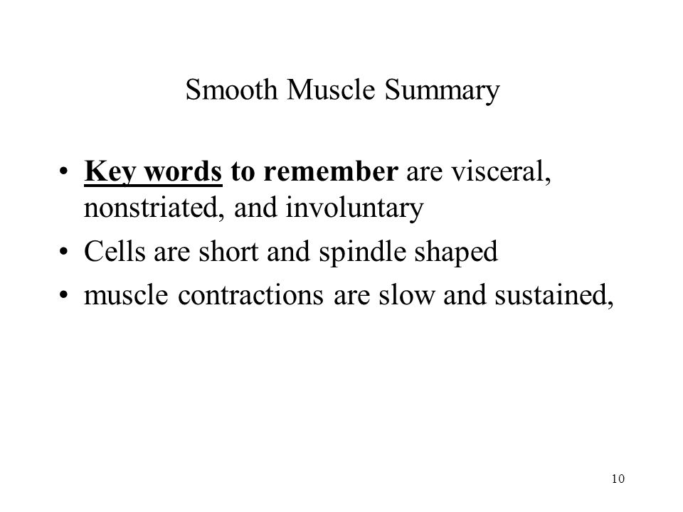 Smooth Muscle Summary Key words to remember are visceral, nonstriated, and involuntary. Cells are short and spindle shaped.