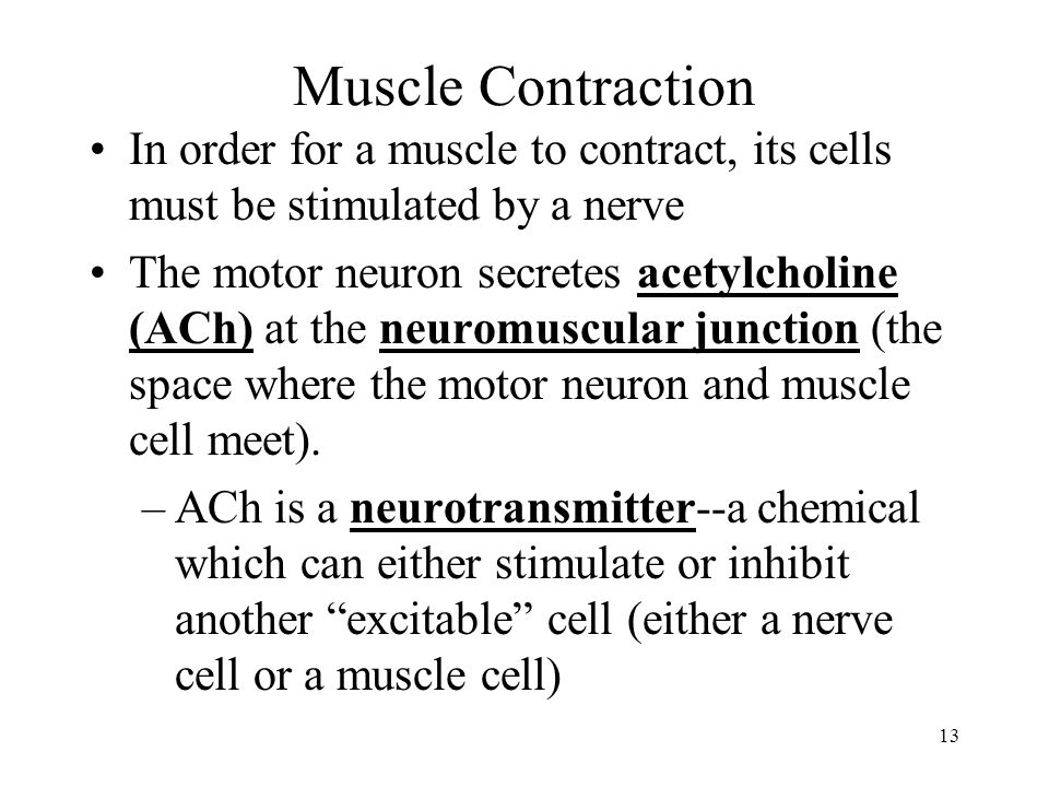 Muscle Contraction In order for a muscle to contract, its cells must be stimulated by a nerve.