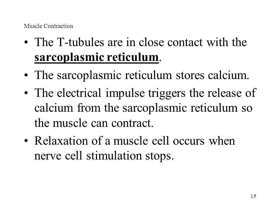 The T-tubules are in close contact with the sarcoplasmic reticulum.