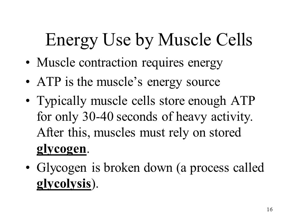 Energy Use by Muscle Cells