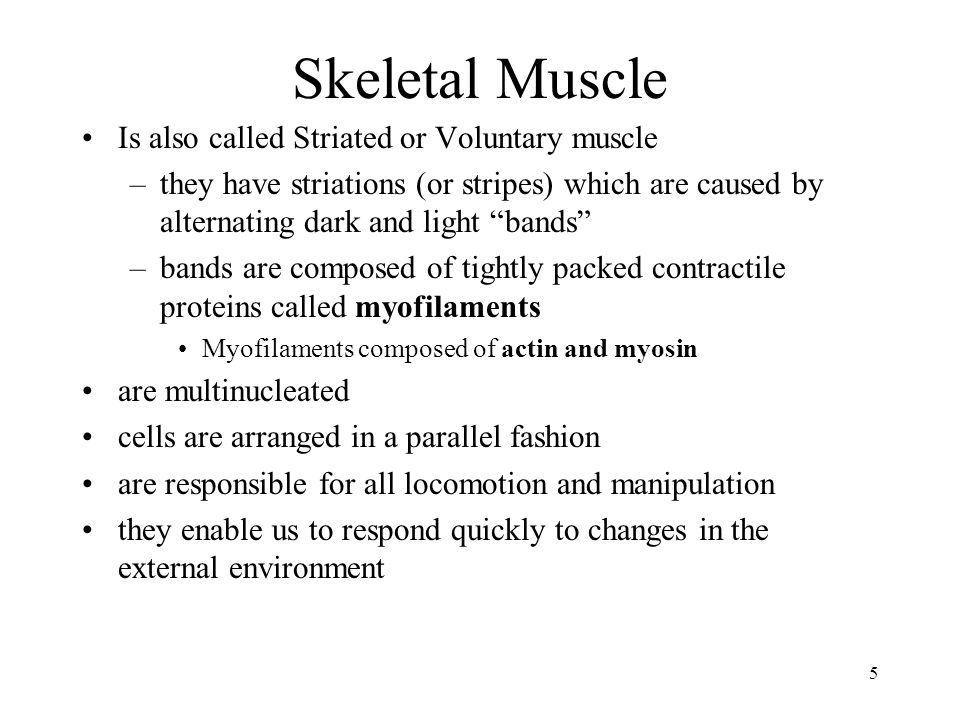 Skeletal Muscle Is also called Striated or Voluntary muscle