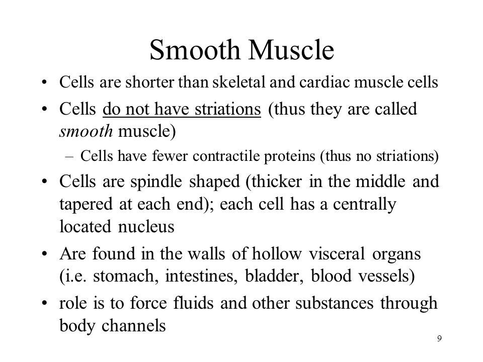 Smooth Muscle Cells are shorter than skeletal and cardiac muscle cells. Cells do not have striations (thus they are called smooth muscle)