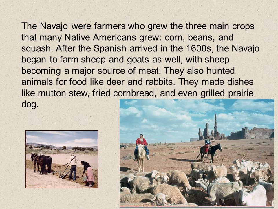 The Navajo were farmers who grew the three main crops that many Native Americans grew: corn, beans, and squash.