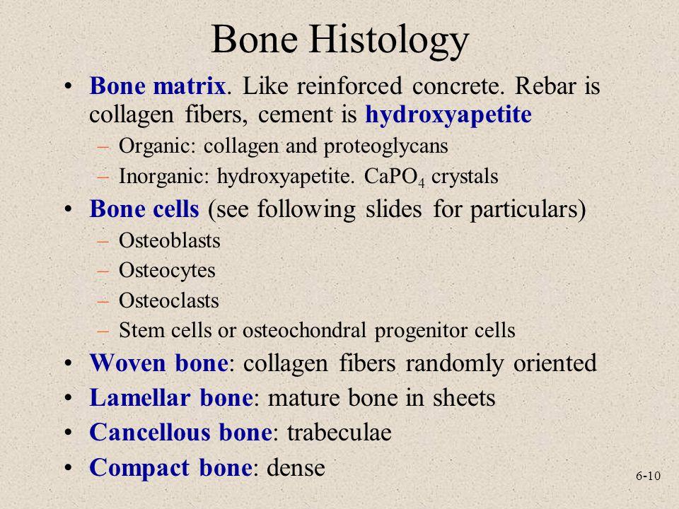 Bone Histology Bone matrix. Like reinforced concrete. Rebar is collagen fibers, cement is hydroxyapetite.