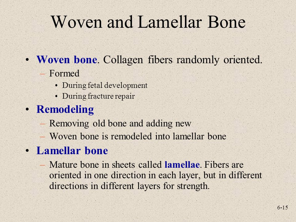 Woven and Lamellar Bone