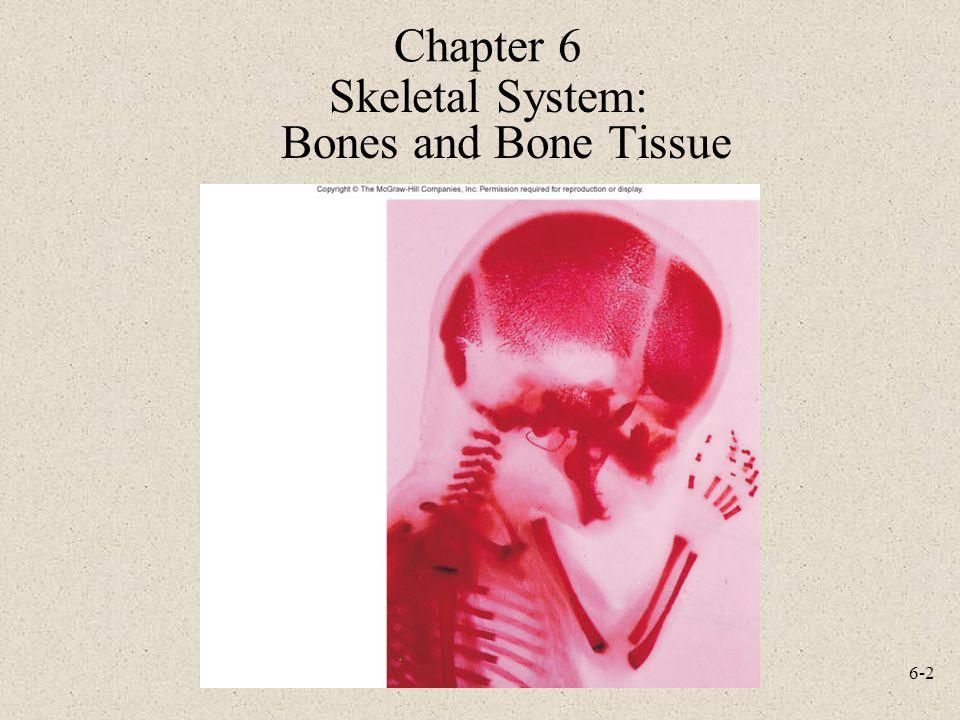 Skeletal System: Bones and Bone Tissue