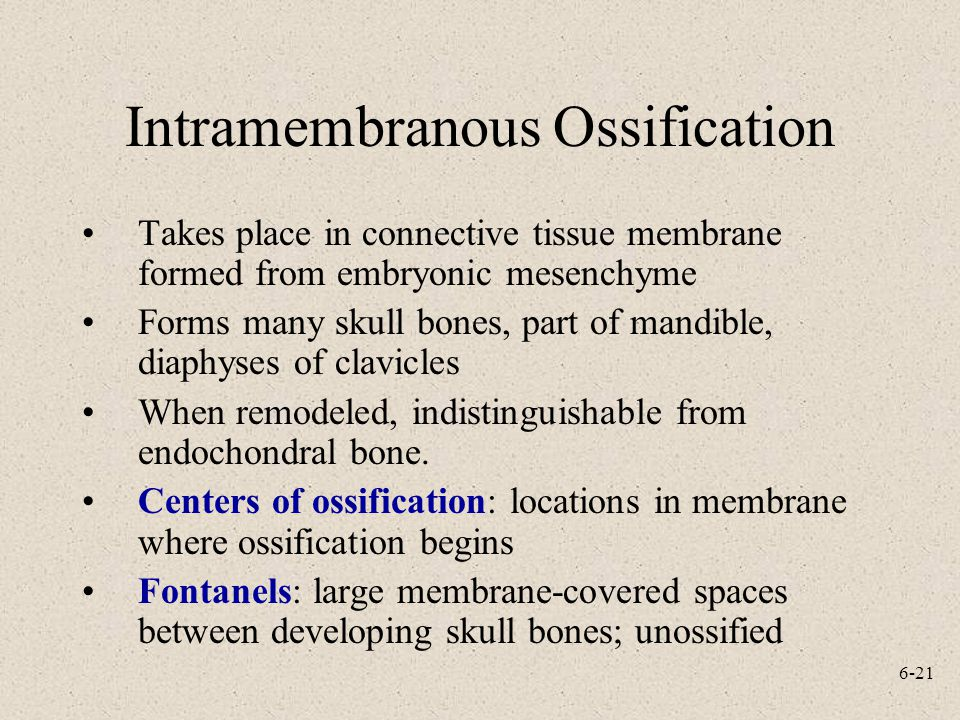 Intramembranous Ossification