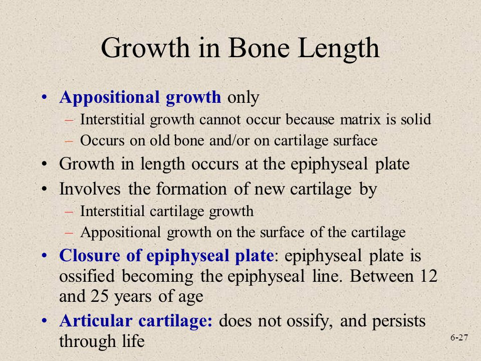 Growth in Bone Length Appositional growth only