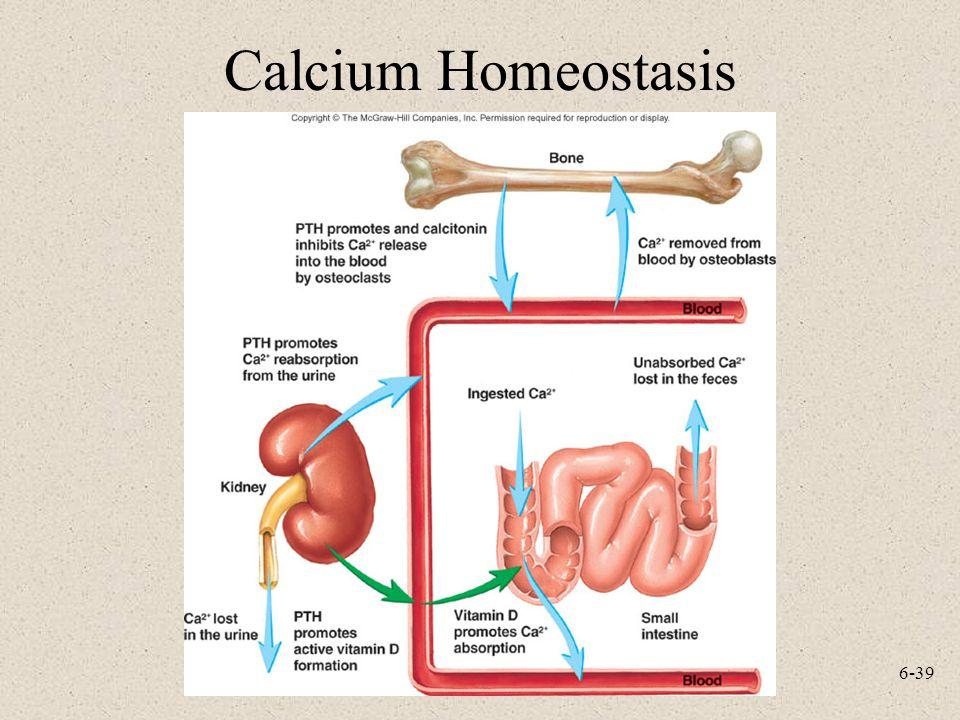 Calcium Homeostasis