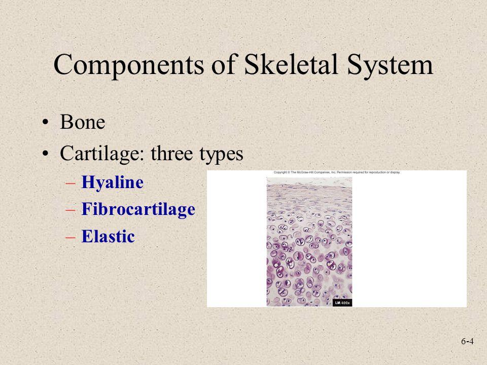 Components of Skeletal System