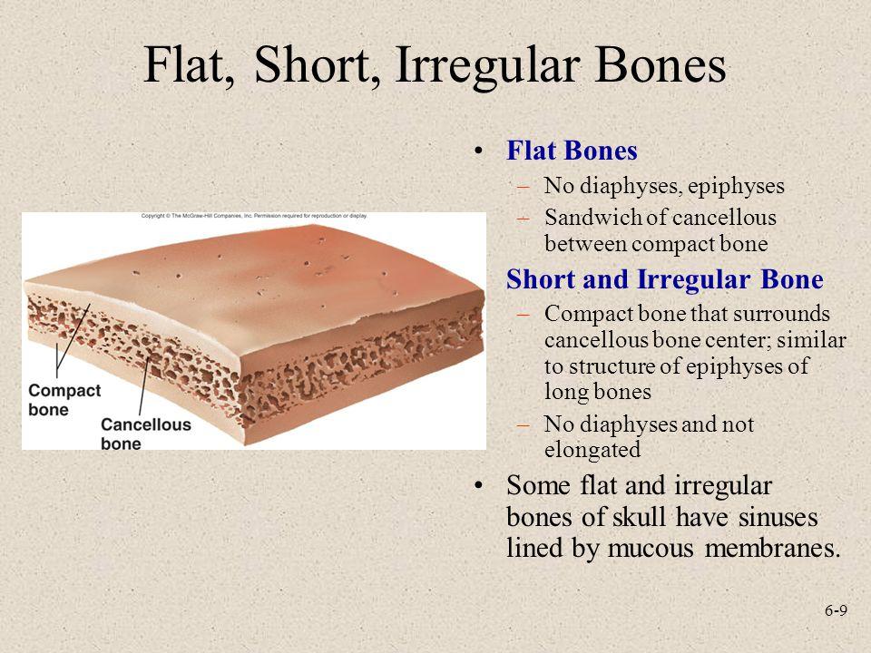 Flat, Short, Irregular Bones