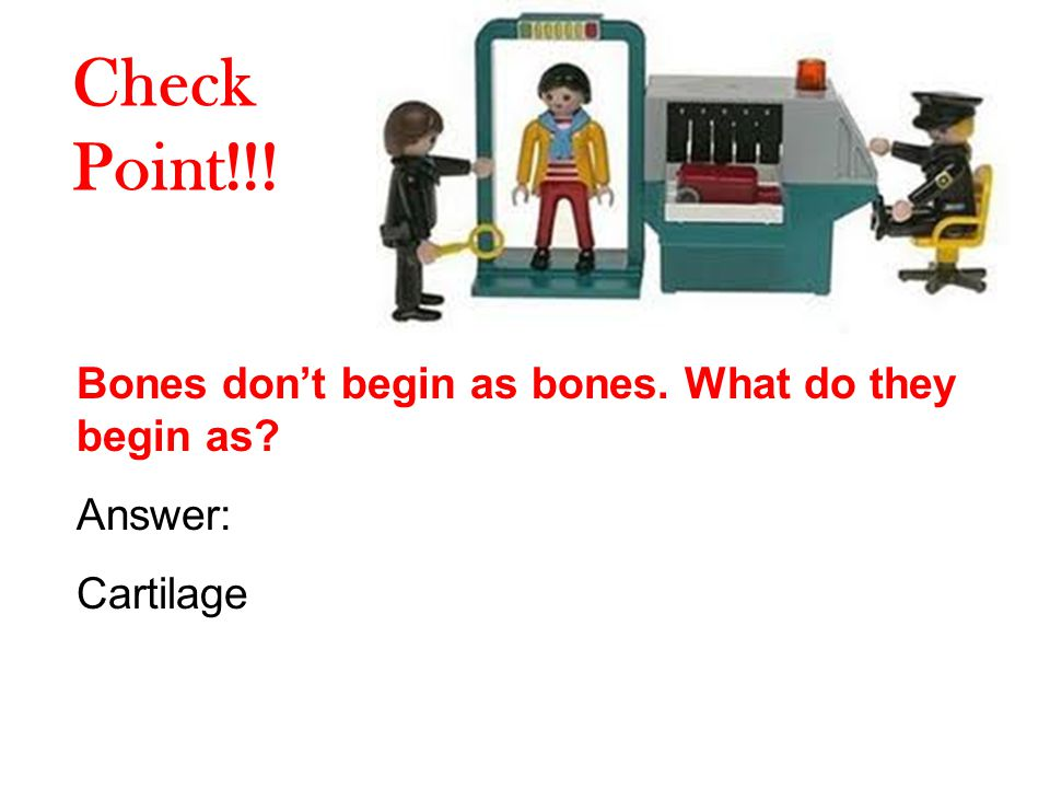 Check Point!!! Bones don't begin as bones. What do they begin as Answer: Cartilage