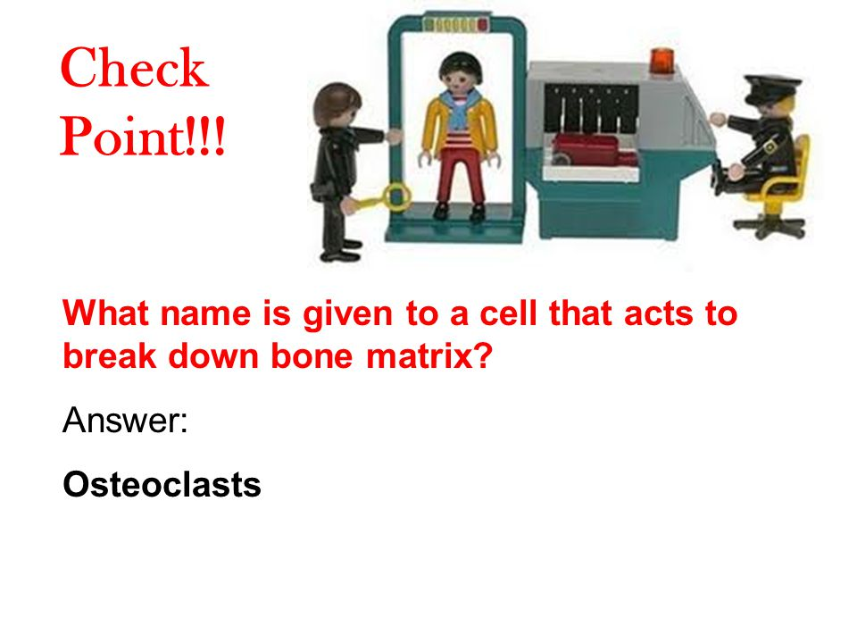 Check Point!!. What name is given to a cell that acts to break down bone matrix.