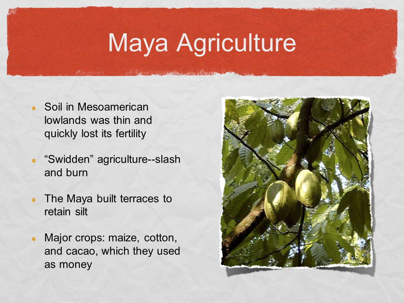 Maya Agriculture Soil in Mesoamerican lowlands was thin and quickly lost its fertility. Swidden agriculture--slash and burn.
