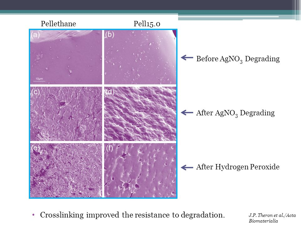 Crosslinking improved the resistance to degradation.