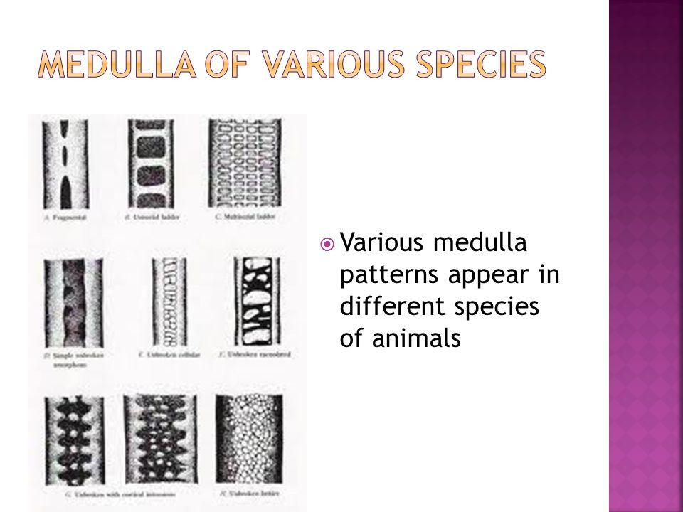 Medulla of various species