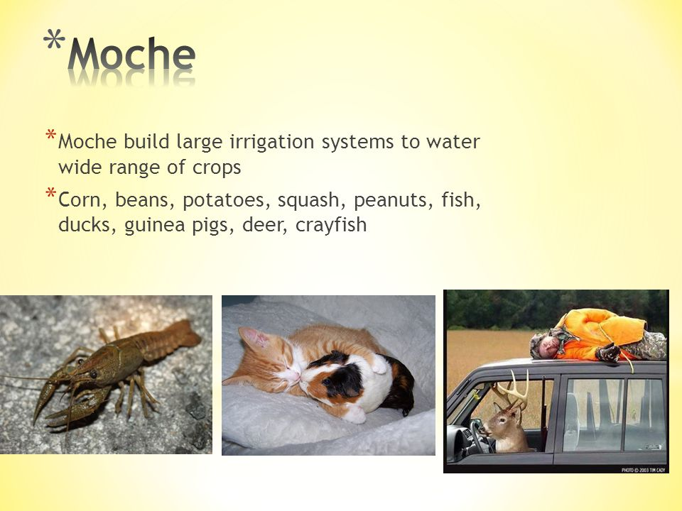 Moche Moche build large irrigation systems to water wide range of crops.