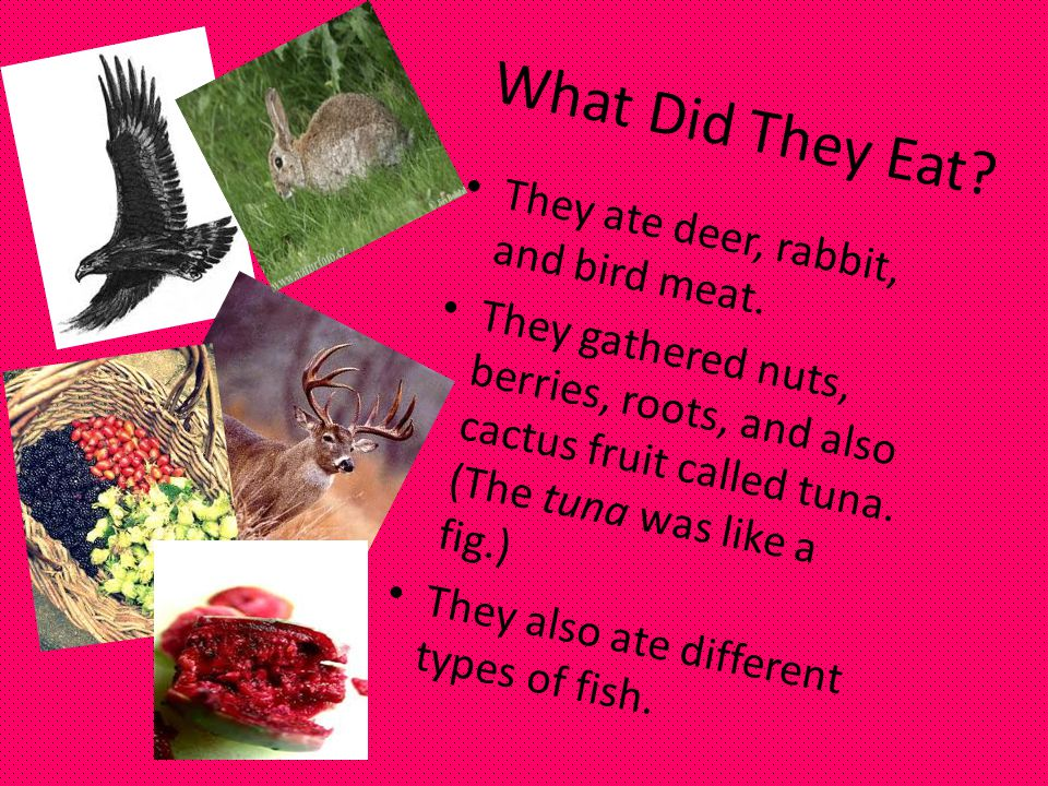 What Did They Eat They ate deer, rabbit, and bird meat.