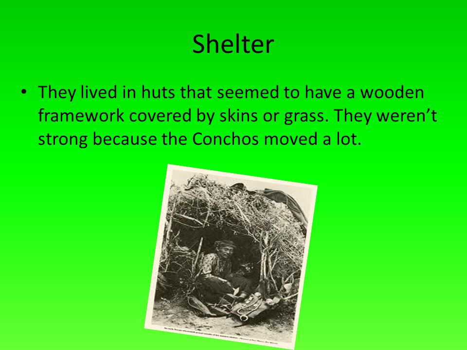 Shelter They lived in huts that seemed to have a wooden framework covered by skins or grass.