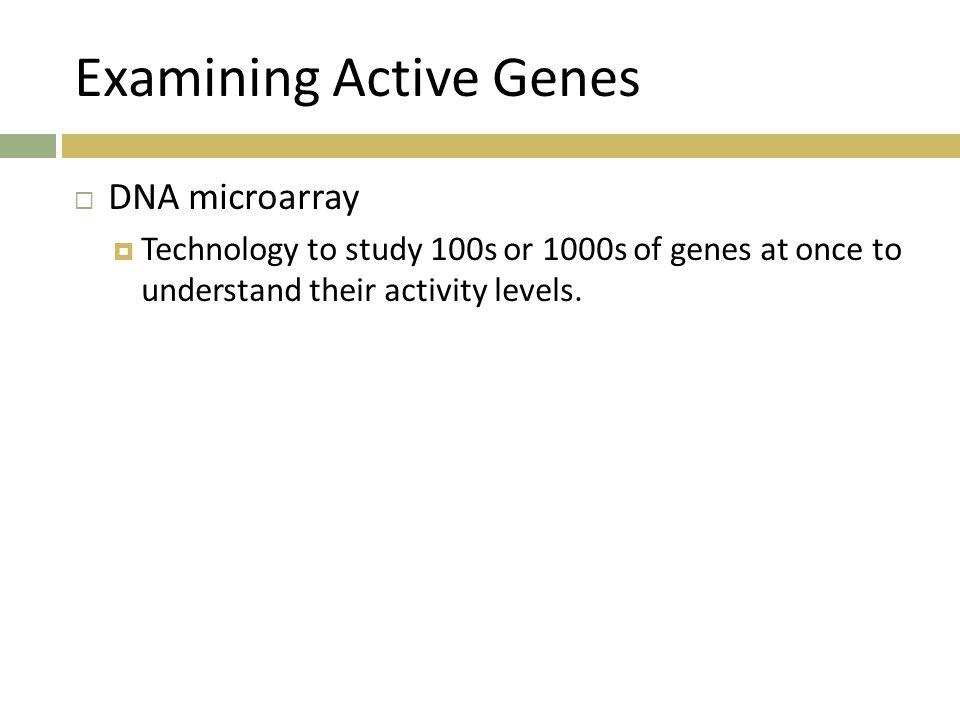 Examining Active Genes