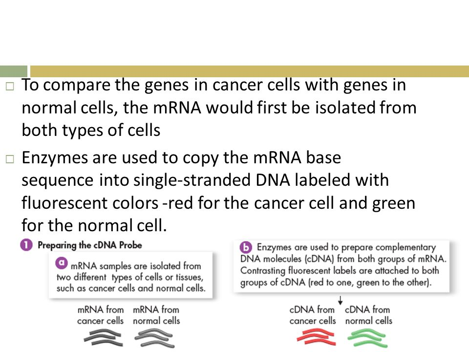 To compare the genes in cancer cells with genes in normal cells, the mRNA would first be isolated from both types of cells