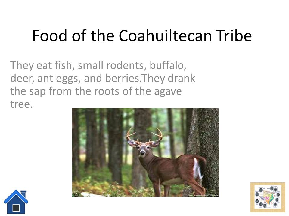 Food of the Coahuiltecan Tribe