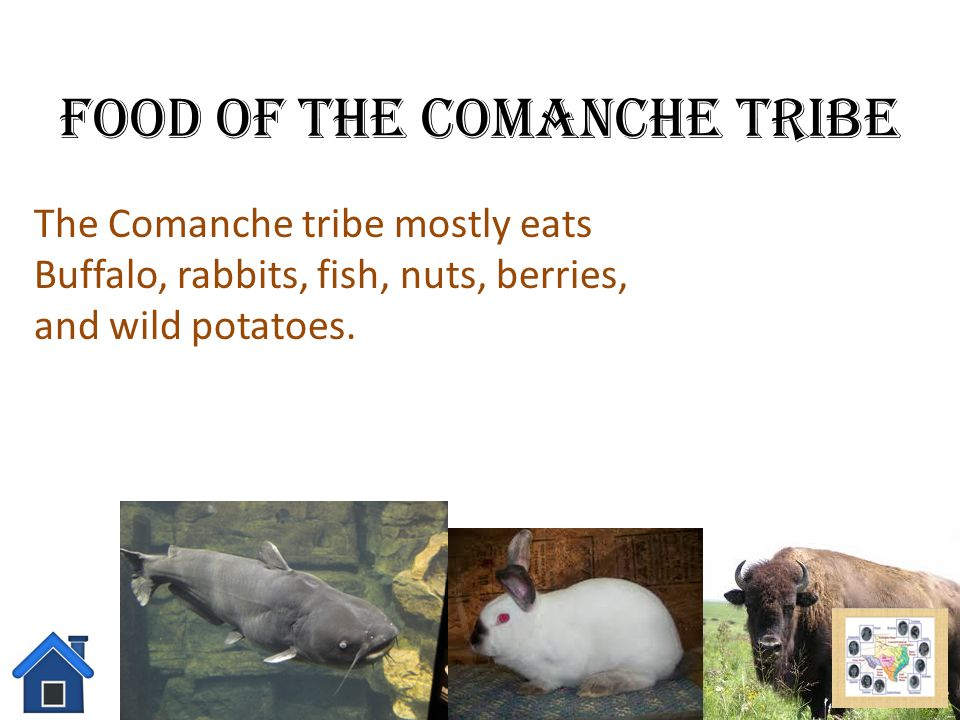Food of the Comanche Tribe