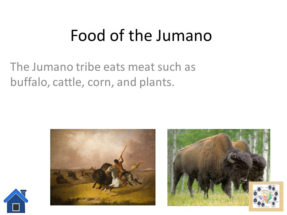 The Jumano tribe eats meat such as buffalo, cattle, corn, and plants.