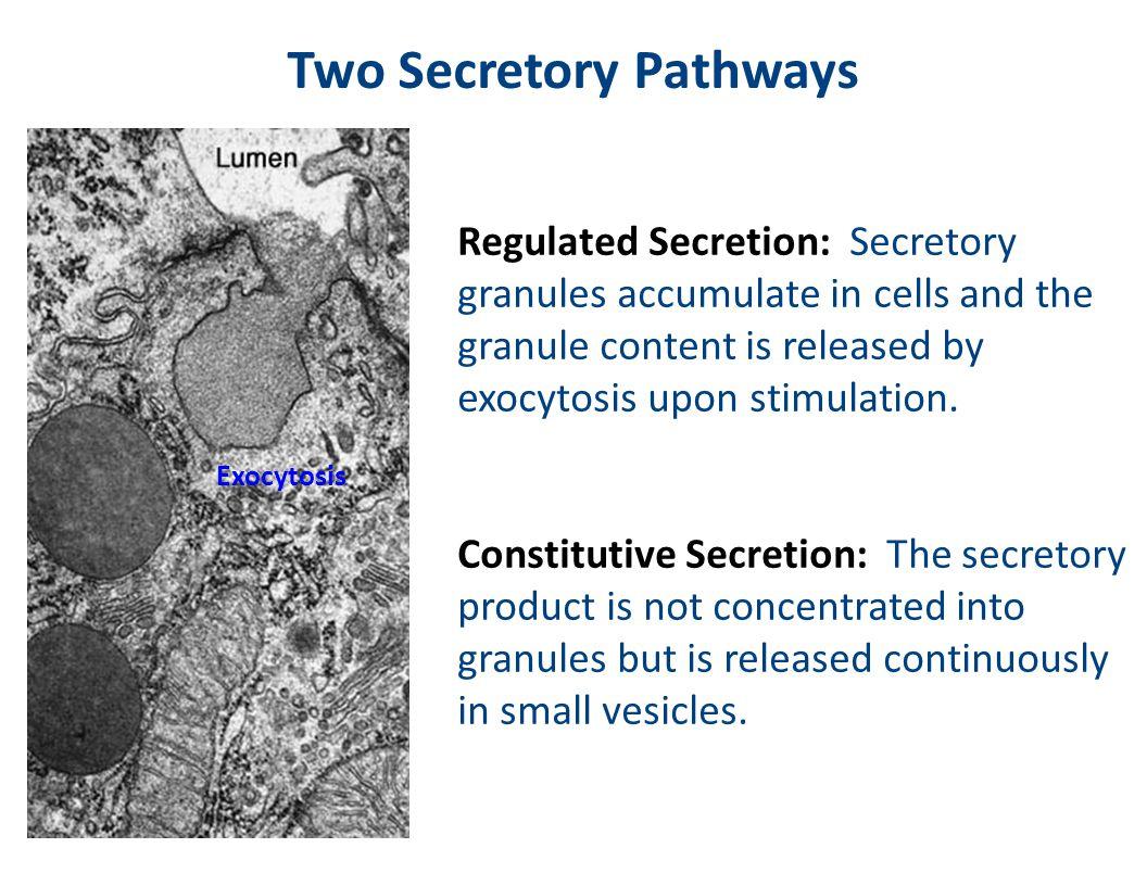 Two Secretory Pathways
