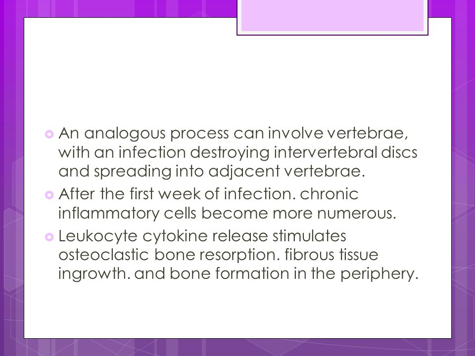 An analogous process can involve vertebrae, with an infection destroying intervertebral discs and spreading into adjacent vertebrae.