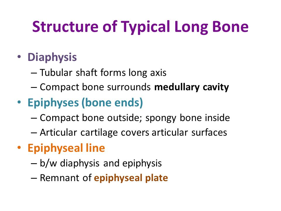 Structure of Typical Long Bone