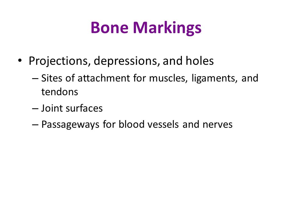 Bone Markings Projections, depressions, and holes