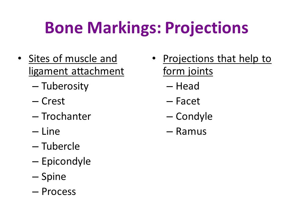 Bone Markings: Projections