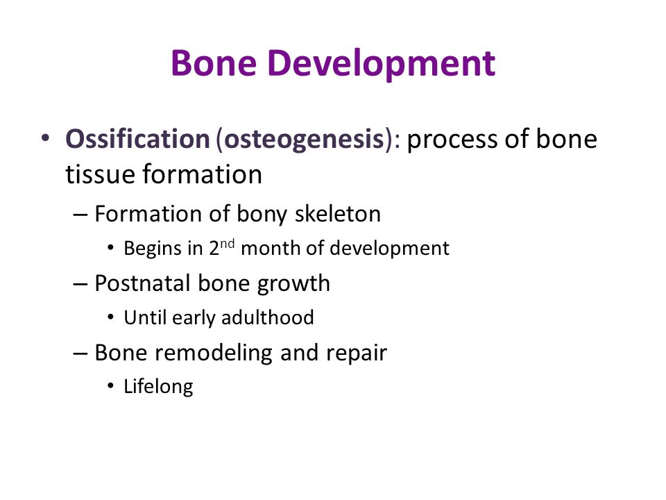 Bone Development Ossification (osteogenesis): process of bone tissue formation. Formation of bony skeleton.