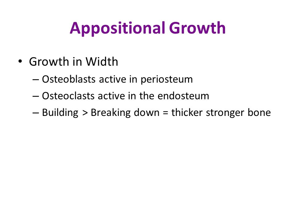 Appositional Growth Growth in Width Osteoblasts active in periosteum