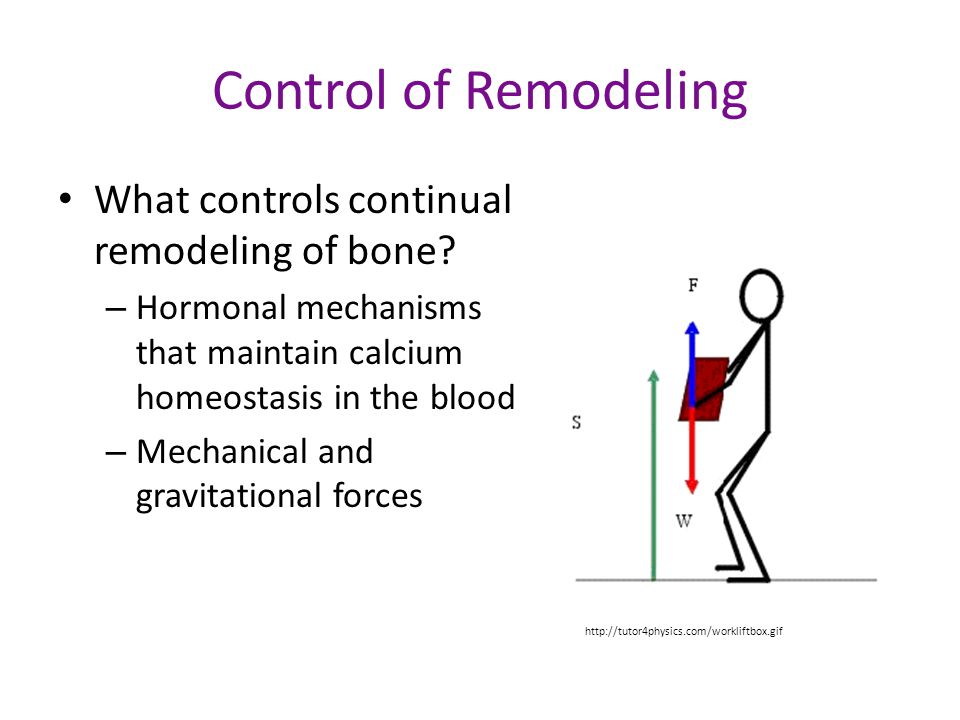 Control of Remodeling What controls continual remodeling of bone