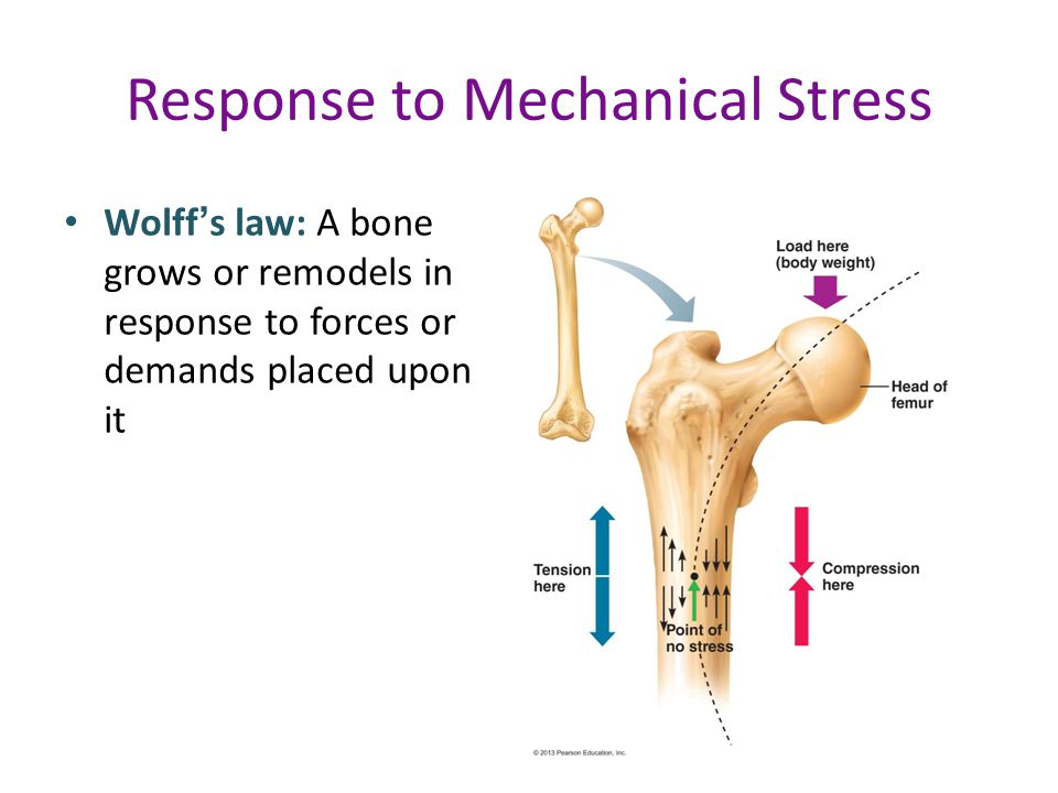 Response to Mechanical Stress